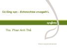 Cỏ lồng vực - Echinochloa crusgalli L