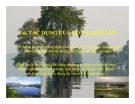 Chương 5.6: Tác dụng của hồ và đầm lầy