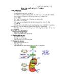 Giáo án Sinh học 10 bài 16: Hô hấp tế bào