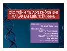 Tiểu luận:  Các trình tự  ADN không ghi mã lặp lại liên tiếp nhau