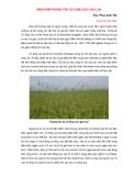Biện pháp phòng trừ cỏ lồng vực cho lúa