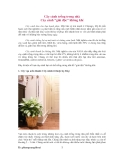Cây cảnh trồng trong nhà  - Cây cảnh giải độc không khí