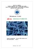 Tiểu luận vi sinh : Bacillus Brevis