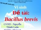 Thuyết trình: Bacillus Brevis