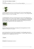 10 loại cây củng cố phong thuỷ trong nhà