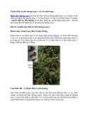 Thuốc điều trị tiểu đường type 2 với cây thảo dược