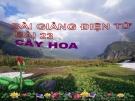 Bài giảng TNXH 1 bài 23: Cây hoa