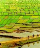 Đất đai hàng hóa và vấn đề quản lý thị trường đất đai - Nguyễn Mạnh Khang