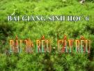Bài giảng Sinh học 6 bài 38: Rêu và cây rêu