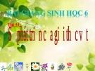 Bài giảng Sinh học 6 bài 44: Sự phát triển của giới thực vật