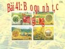 Bài giảng Công nghệ 10 bài 41: Bảo quản hạt, củ làm giống