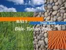 Bài giảng Công nghệ 12 bài 5: Thực hành Điôt - Tirixto - Triac