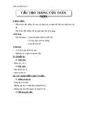Giáo án Sinh học 6 bài 15: Cấu tạo của thân non
