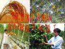 Bài giảng Công nghệ 7 bài 7: Tác dụng của phân bón trong trồng trọt
