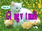Bài giảng Công nghệ 7 bài 31: Giống vật nuôi