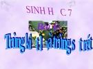 Bài giảng Sinh học 7 bài 6: Trùng kiết lị và trùng sốt rét
