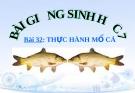 Bài giảng Sinh học 7 bài 32: Thực hành  mổ cá