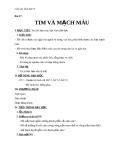 Giáo án Sinh học 8 bài 17: Tim và mạch máu