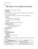 Giáo án Sinh học 8 bài 24: Tiêu hóa và các cơ quan tiêu hóa