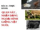 Bài giảng Công nghệ 10 bài 24: Thực hành - Quan sát nhận dạng ngoại hình giống vật nuôi