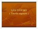 Bài giảng Sán dây bò (Toenia saginata )