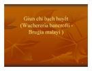 Bài giảng Giun chỉ bạch huyết (Wuchereria bancrofti Brugia malayi)