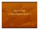 Bài giảng Sán lá ruột (Fasciolopsis buski)