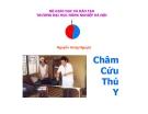Bài giảng Châm cứu thú y - Nguyễn Hùng Nguyệt