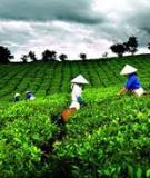 Báo cáo tổng kết: Đề tài Nghiên cứu thực trạng và đề xuất các giải pháp góp phần phát triển kinh tế - xã hội các huyện miền núi tỉnh Quảng Ngãi