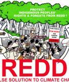 Các yếu tố đảm bảo an toàn xã hội và quá trình chuẩn bị sẵn sàng thực thi REDD+: Khuôn khổ chung và các khoảng trống cần lấp đầy đối với tỉnh Quảng Bình, Việt Nam