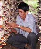 Khóa luận: Kỹ thuật trồng và sau thu hoạch nấm Linh chi