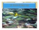 Bài giảng về Kinh tế thủy sản