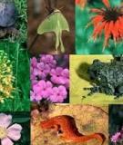Đề tài: Đa dạng sinh học và bảo tồn