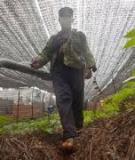 Chuyên đề tốt nghiệp: Thử hiệu lực của một số thuốc trừ sâu có nguồn gốc thảo mộc đối với sâu hại chính trên lúa và trên rau cải trong vụ mùa năm 2013 tại xã Thanh An – huyện Điện Biên – tỉnh Điện Biên