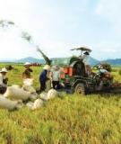 Tiểu luận: Phân tích phát triển và phát triển nông thôn, liên hệ thực tế ở địa phương