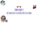 Bài giảng Sự sinh sản và nuôi con của chim - Khoa học 5 - GV.Đ.T.Lý