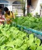 Xây dựng khung logic của dự án trồng rau sạch