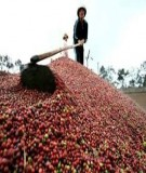 Chuyên đề môn học Quản trị xuất nhập khẩu: Thực trạng xuất khẩu cà phê Việt Nam năm 2013 và giải pháp