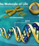 Phương pháp giải bài tập chương II Di truyền học