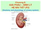 Bài giảng Giải phẩu - Sinh lý hệ bài tiết (P2)