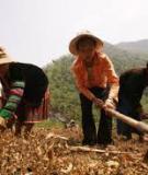 Tiểu luận: Phương thức sinh kế của người Ca Dong tại khu tái định cư thủy điện Đắk Đrinh – Quảng Ngãi
