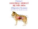 Bài giảng Chương 4: Giải phẩu - Sinh lý hệ tiêu hóa - Dr Võ Văn Toàn
