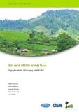 Báo cáo chuyên đề: Bối cánh REDD+ ở Việt Nam