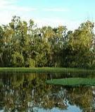 Luận văn Thạc sỹ ngành Khoa học Môi trường: Nghiên cứu tính đa dạng thực vật đất ngập nước của sông nhuệ đáy (phần chảy qua tỉnh Hà Nam) và khả năng sử dụng chúng để xử lý ô nhiễm môi trường