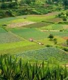 Đề tài: Đánh giá hiệu quả sử dụng đất nông nghiệp xã Phong Hòa huyện Phong Điền - Thừa Thiên Huế