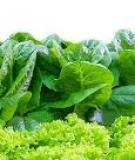 Đề tài: Thực trạng và giải pháp tiêu thụ rau an toàn ở Việt Nam