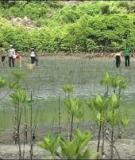 Luận án Tiến sĩ Kinh tế: Giá trị kinh tế của tài nguyên đất ngập nước tại cửa sông Ba Lạt tỉnh Nam Định