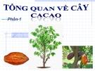 Bài giảng Tổng quan về cây ca cao