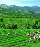 Luận án Tiến sĩ Kinh doanh và quản lý: Marketing lãnh thổ với việc thu hút đầu tư phát triển ở tỉnh Thái Nguyên