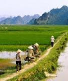 Khóa luận: Hiện trạng sử dụng đất nông nghiệp ở Nghĩa Đàn
